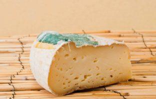 Бесплатный сыр
