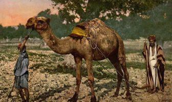 Жизнь на Аравийском полуострове до Ислама