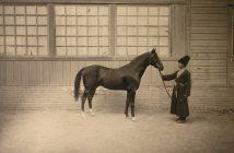 Ахалтекинская лошадь — тюркская драгоценность Востока